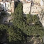 Las mejoras del parque amenazan la arboleda